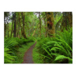 Maple Glade trail, ferns and moss covered Postcard