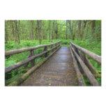 Maple Glade trail wooden bridge, ferns and Art Photo