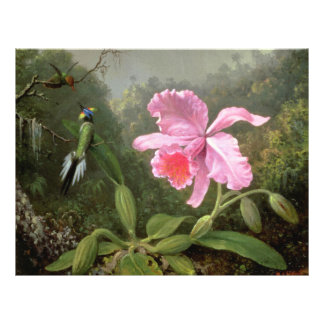 Martin Johnson Heade Orchid And Hummingbirds 21.5 Cm X 28 Cm Flyer