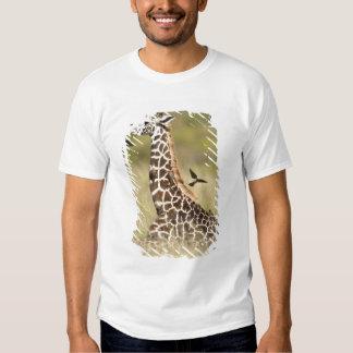 Masai giraffes, Giraffa camelopardalis T-shirts