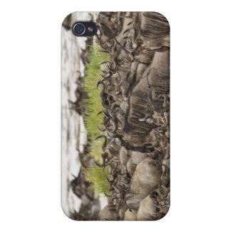 Massive Wildebeest herd during migration, iPhone 4/4S Cases