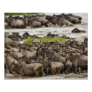 Massive Wildebeest herd during migration, Poster