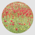 Meadow With Beautiful Bright Red Poppy Flowers Round Sticker