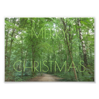 Merry Christmas Path Trees Nature Photography Photograph