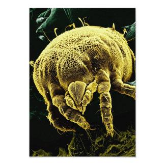 Microscopic Arthropod Acari Mite Lorryia Formosa 13 Cm X 18 Cm Invitation Card