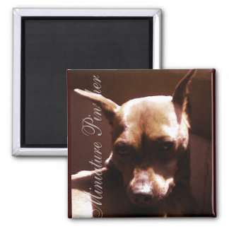 Miniature Pinscher Square Magnet