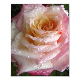 Misty Rose Photograph