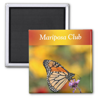 Monarch Butterfly In Search of Pollen Square Magnet