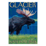 Moose at Night - Glacier National Park, MT Poster
