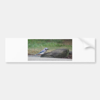 Morning Blue Jay Bumper Sticker
