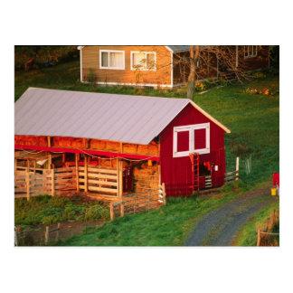 Morning chores on the farm. USA, Vermont, Postcard