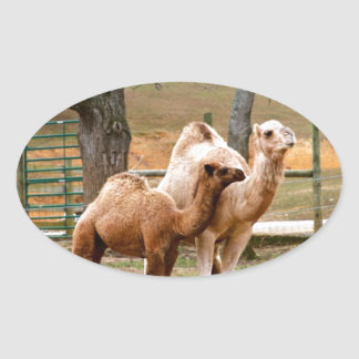 Mother Camel and Baby Animal Photo Desert Animal Oval Sticker