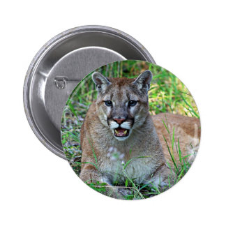 Mountain Lion Complaining 6 Cm Round Badge