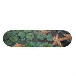 N.A., USA, Washington, Olympic National Park, 2 20 Cm Skateboard Deck