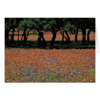 NA, Texas, Texas Hill Country, Buchan Dam, Greeting Card