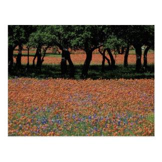 NA, Texas, Texas Hill Country, Buchan Dam, Postcard