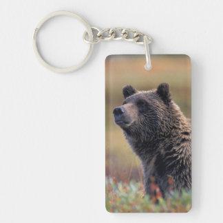 NA, USA, Alaska, Denali NP, Grizzly bear Double-Sided Rectangular Acrylic Key Ring