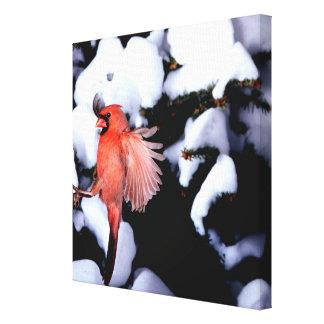 NA, USA, Minnesota, Mendota Heights. Female Gallery Wrapped Canvas