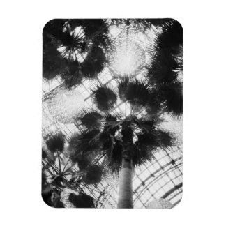 NA, USA, New York, New York City. Palm trees in Rectangular Photo Magnet