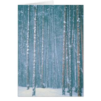 NA, USA, WY. Snowy winter scene among Greeting Card