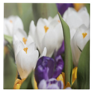 Netherlands, Keukenhoff Gardens, Tulips. Large Square Tile