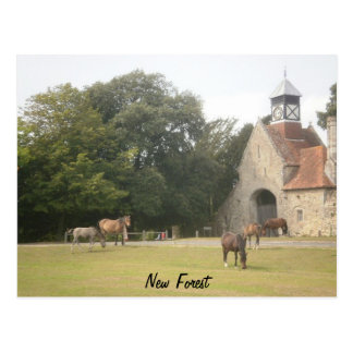 New Forest Hampshire Postcard