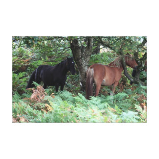 New Forest Ponies of Hampshire England Stretched Canvas Prints