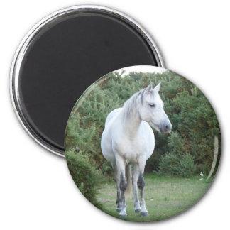 new forest pony 6 cm round magnet