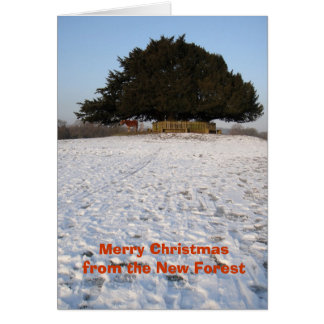 New Forest pony Christmas card