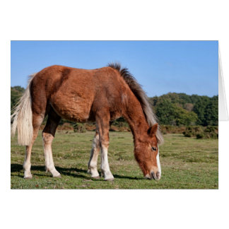 New Forest Pony - Greeting Card