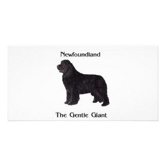 Newfoundland Dog The Gentle Giant Custom Photo Card