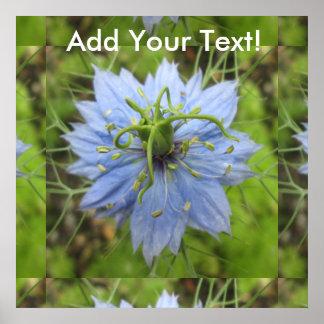 Nigella Blue Green Blooming Flower Poster