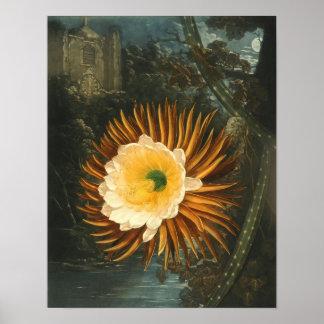 Night-Blooming Cereus Vintage Flower  Thornton Poster