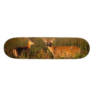 North America, USA, Montana, National Bison 18.1 Cm Old School Skateboard Deck