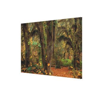 North America; USA; Washington, Moss-Covered Stretched Canvas Prints