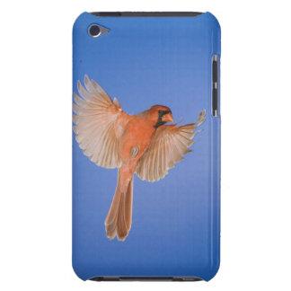 Northern Cardinal, Cardinalis cardinalis, male Barely There iPod Covers
