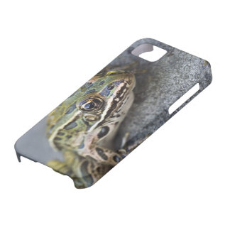 Northern Leopard frog, See-through Island, Barely There iPhone 5 Case