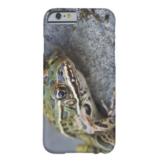 Northern Leopard frog, See-through Island, Barely There iPhone 6 Case
