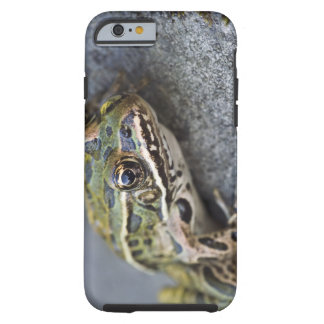Northern Leopard frog, See-through Island, Tough iPhone 6 Case
