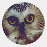 Northern Saw-whet owl Round Sticker
