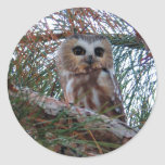 Northern Saw-Whet Owl with Huge Eyes Round Sticker