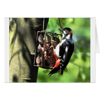 Notecard: Male Woodpecker on Garden Feeder Note Card
