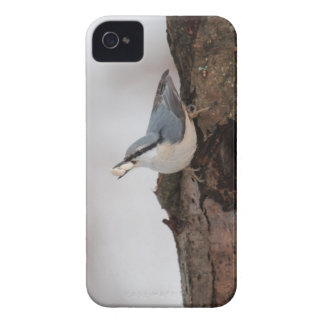 Nuthatch with some nuts iPhone 4 case