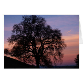 Oaks at Sunset Greeting Card