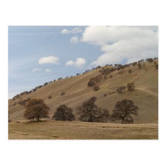 Oaks on Hillside Postcard
