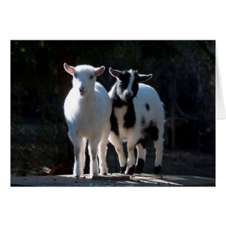 Oh So Cute Nigerian Dwarf Goats Greeting Card