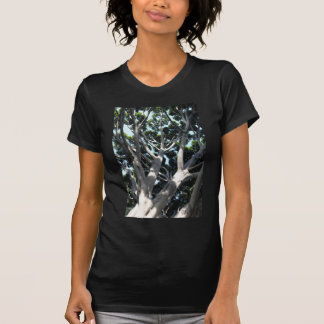 Old Fig Tree Shirts