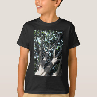 Old Fig Tree Tee Shirt