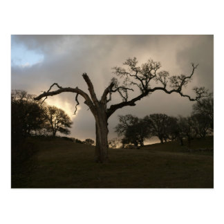 Old Winter Oak Postcard
