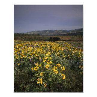 OR, Columbia River Gorge, Rowena Plateau, Tom Photo Print